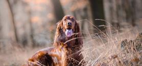 Ticks beware: Lyme disease preventative earns expanded label