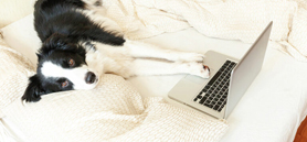 Seven pet care tips for owners returning to work