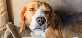 Animal pain council bolstered with partnership