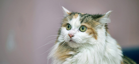 Intermittent fasting could regulate feline eating habits
