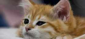 Kittens yearn for mother's touch in first weeks