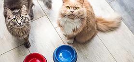 Cat deaths surge in United Kingdom amidst food recall